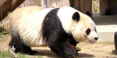園外保育〈遠足・王子動物園〉 令和3(2021)年3月15日